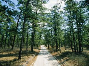 Sand Road Through the Pine Barrens, New Jersey by Skip Brown