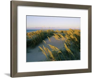 Sea Oats, Dunes, and Beach at Oregon Inlet