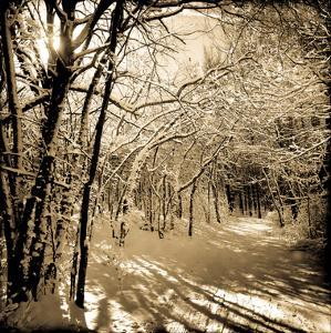 Snow Covered Canopy of Trees over a Cross Country Trail by Skip Brown