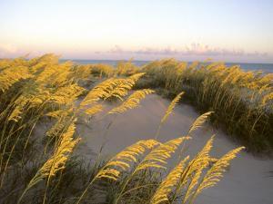 Sunlight Strikes Sea Oats on Dunes Near the Atlantic Ocean by Skip Brown