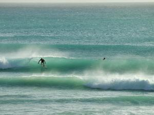 Surfer Rides a Wave in Barbados by Skip Brown