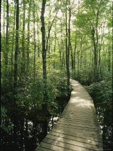 The Boardwalk Nature Trail in Great Swamp National Wildlife Refuge by Skip Brown