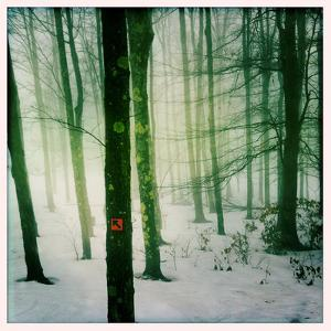 Trees in Fog in Winter at the Timberline Ski Area by Skip Brown