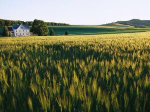 Wheatfields Glowing in the Sun and a Farmhouse in the Distance by Skip Brown