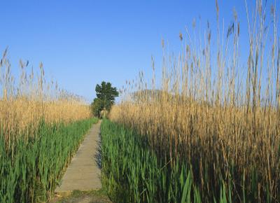 Wooden Nature Trail in the Marshland of Cape May Point State Park