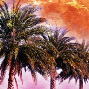 Hifi Palms I by Skip Nall