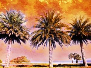 Hifi Palms II by Skip Nall