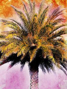 Hifi Palms IV by Skip Nall