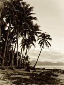 Island Palms I by Skip Nall