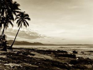 Island Palms II by Skip Nall