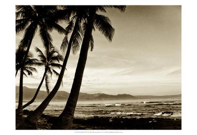 Island Palms III