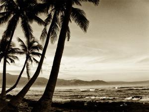 Island Palms III by Skip Nall
