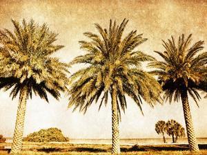 Palms on Brown II by Skip Nall