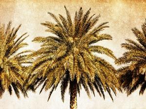 Palms on Brown III by Skip Nall