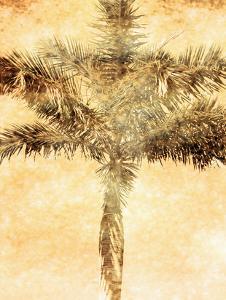 Palms on Brown IV by Skip Nall
