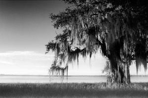 Southern Swing III by Skip Nall