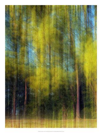 Tree Blur I