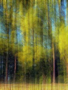 Tree Blur I by Skip Nall