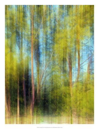 Tree Blur II