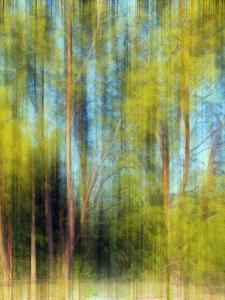 Tree Blur II by Skip Nall