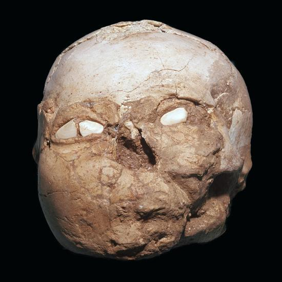 Skull from Jericho, modelled with plaster and shells-Unknown-Giclee Print