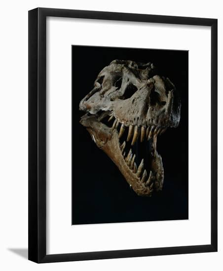 Skull of a Tyrannosaurus Rex-Ira Block-Framed Photographic Print