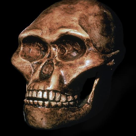 Skull of Australopithecus Africanus-Unknown-Giclee Print