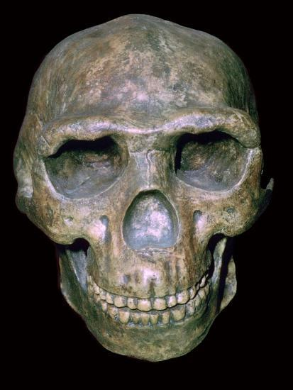 Skull of 'Peking' man (reconstruction). Artist: Unknown-Unknown-Photographic Print