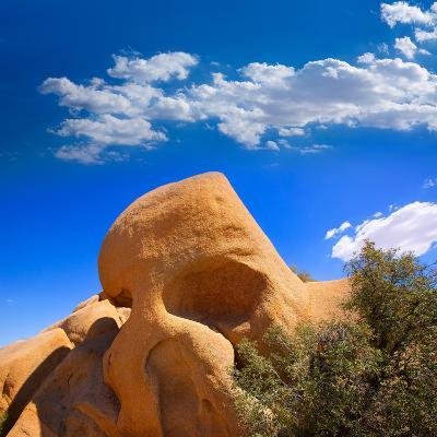 Skull Rock in Joshua Tree National Park Mohave California-Lunamarina-Photographic Print