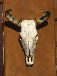 Skull, Santa Fe, NM