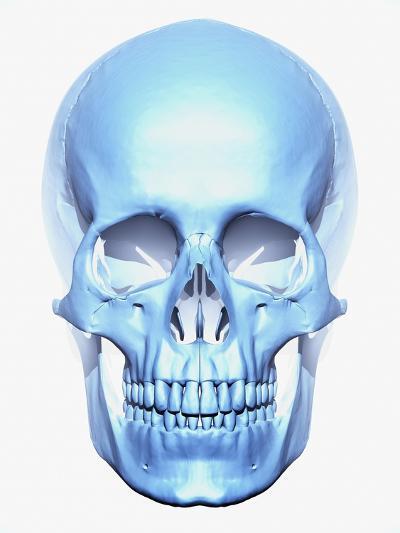 Skull-Matthias Kulka-Giclee Print