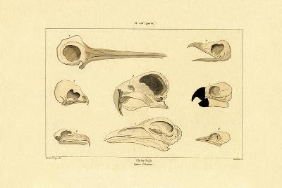 Skulls, 1833-39--Giclee Print