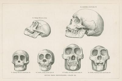 Skulls from Photographs--Giclee Print