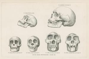 Skulls from Photographs