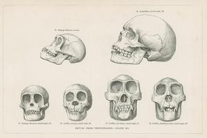 Skulls from Photographs