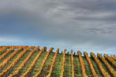 Sky and Vine-Vincent James-Photographic Print