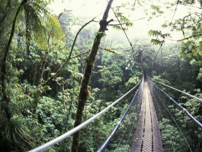 https://imgc.artprintimages.com/img/print/sky-walk-monteverde-cloud-forest-costa-rica_u-l-p3w2u60.jpg?p=0