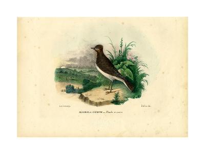 Skylark, 1863-79-Raimundo Petraroja-Giclee Print