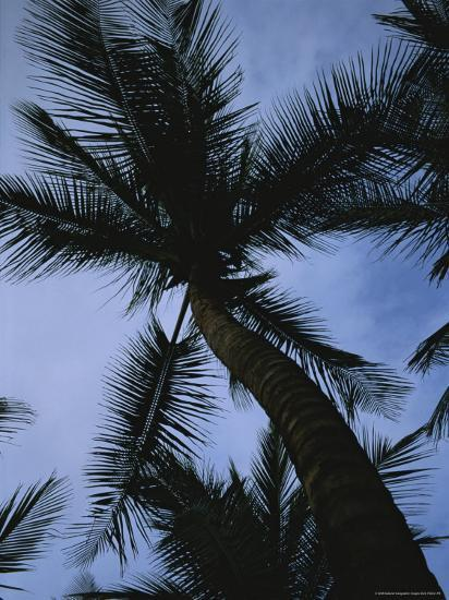 Skyward View of a Palm Tree Silhouetted against the Sky-Taylor S^ Kennedy-Photographic Print
