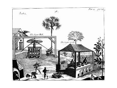 Slave Labour on a Sugar Plantation in the West Indies, 1725--Giclee Print