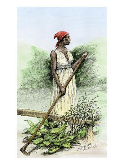 Slave Woman Hoeing Sugar Plants on a Plantation in Louisiana, 1800s--Giclee Print
