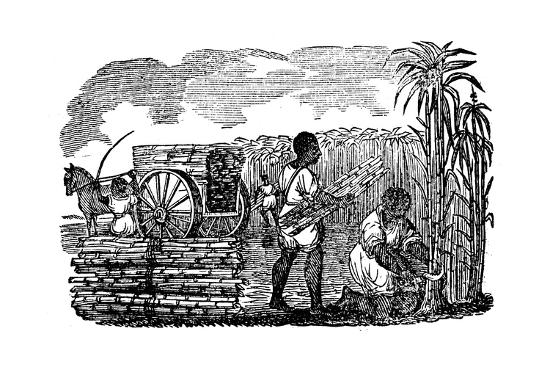 Slaves Harvesting Sugar Cane in Louisiana, 1833--Giclee Print