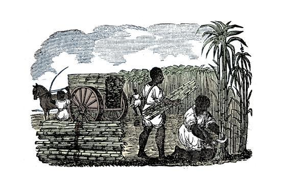 Slaves harvesting sugar cane in Louisiana, 1833-Unknown-Giclee Print