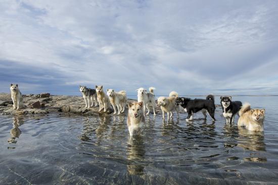 Sled Dogs, Nunavut, Canada-Paul Souders-Photographic Print