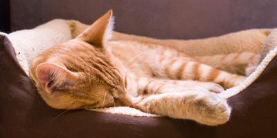 https://imgc.artprintimages.com/img/print/sleeping-orange-cat-in-cat-bed_u-l-q130af40.jpg?p=0
