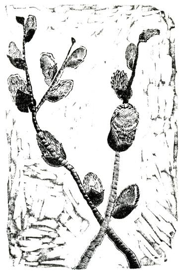 Sleeping Pussy Willow, 2014-Bella Larsson-Giclee Print