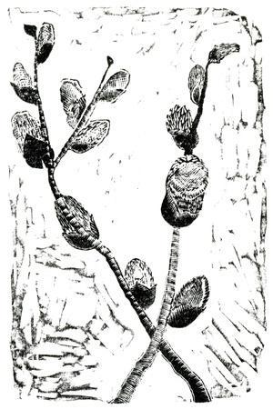 https://imgc.artprintimages.com/img/print/sleeping-pussy-willow-2014_u-l-psfe2n0.jpg?p=0