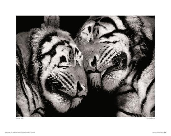 Sleeping Tigers-Marina Cano-Giclee Print