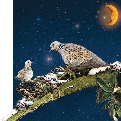 Sleepy Turtledove-Nancy Tillman-Art Print