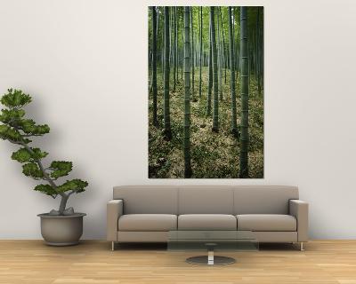 Slender Green Trunks in a Bamboo Forest-Luis Marden-Giant Art Print
